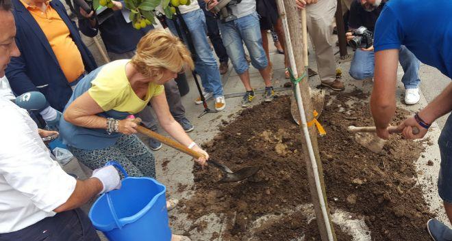 Esperanza Aguirre planta un madroño en Madrid