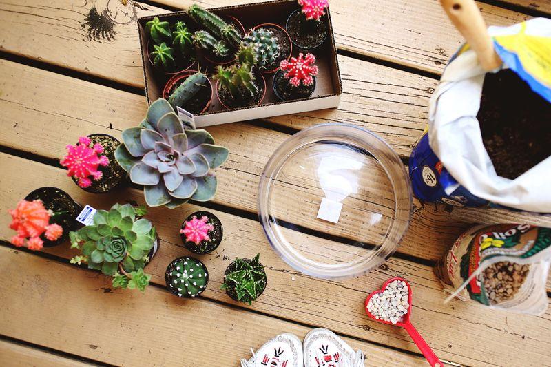 Los cactus: tendencia en la decoración para el hogar en 2017