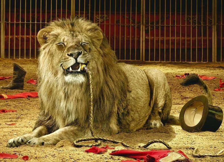 Carmena finalmente no retirará los animales de los circos en Madrid